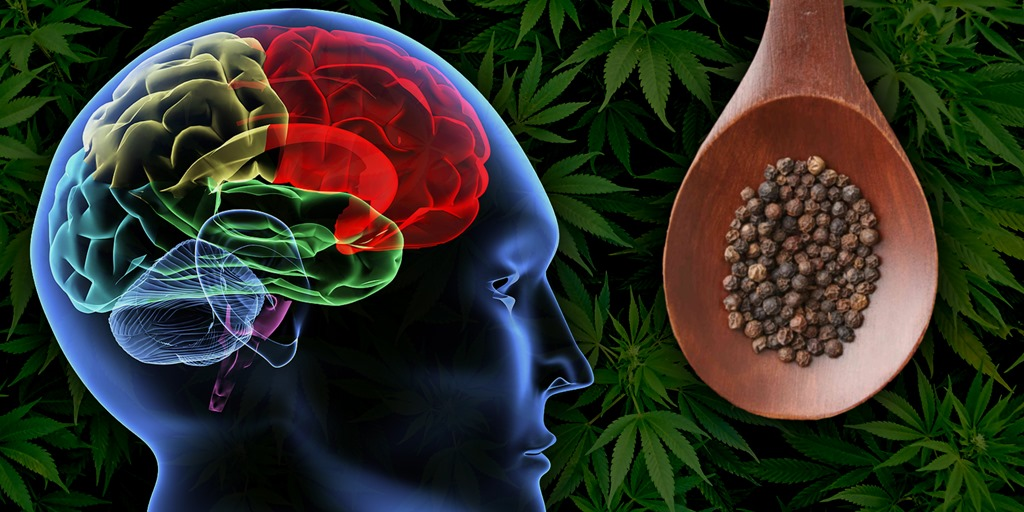 How Black Pepper relieves Cannabis Anxiety - Cannabis Digest