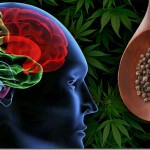 How Black Pepper relieves Cannabis Anxiety
