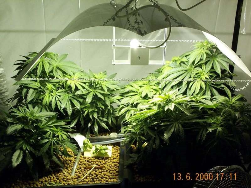 Light Reflective Paint For Grow Room