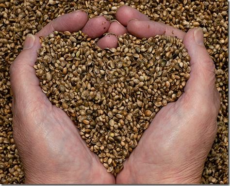hemp-seeds-hands-heart-small