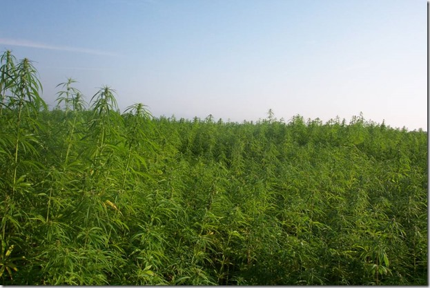 Industrialhemp