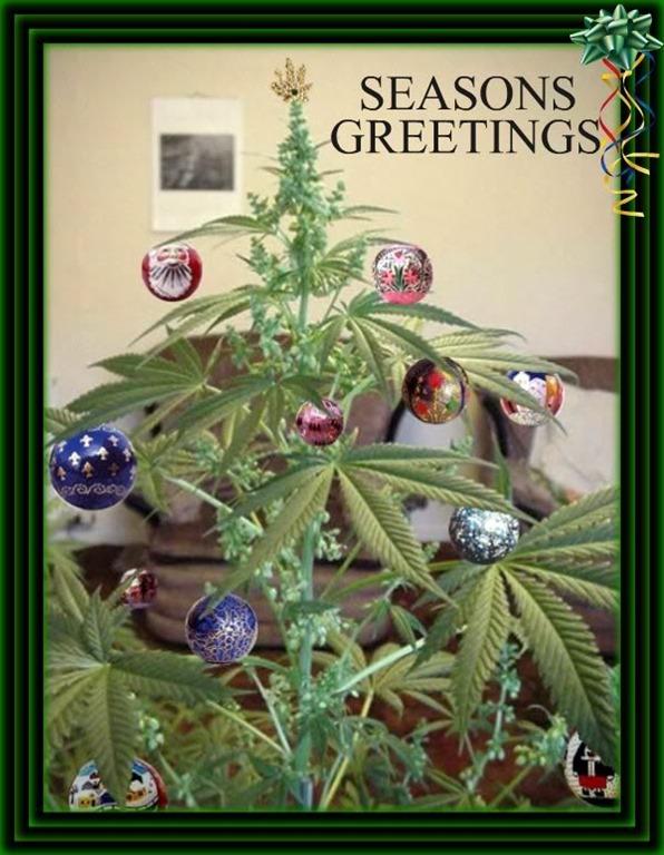 O Cannabis Tree' - Cannabis Digest