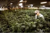 marijuana-industry-feature_thumb.png