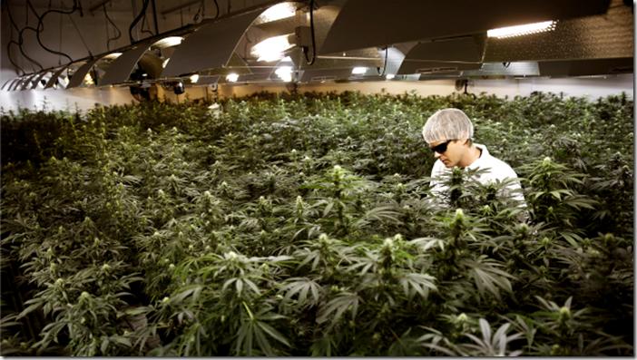marijuana-industry-feature