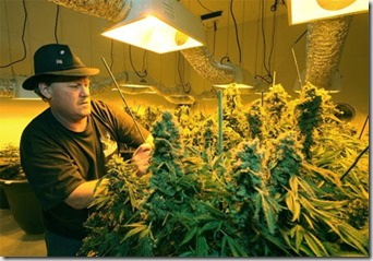 How_to_Obtain_a_Medical_Marijuana_Growers_License