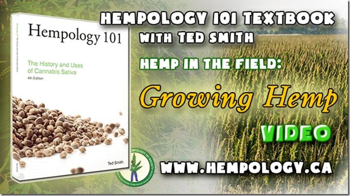 growing hemp