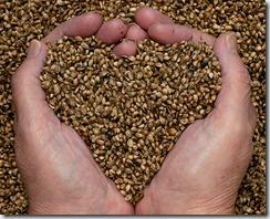 hemp-seeds-hands-heart-small