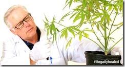 Clinical-Trials-of-Cannabis