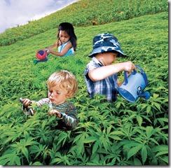 weed-kids