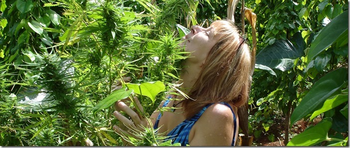 Cannabis Dependence - Cannabis Digest