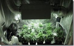 Grow ventilator tent_1
