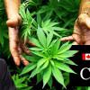 Allard Conroy Health Canada Ruling