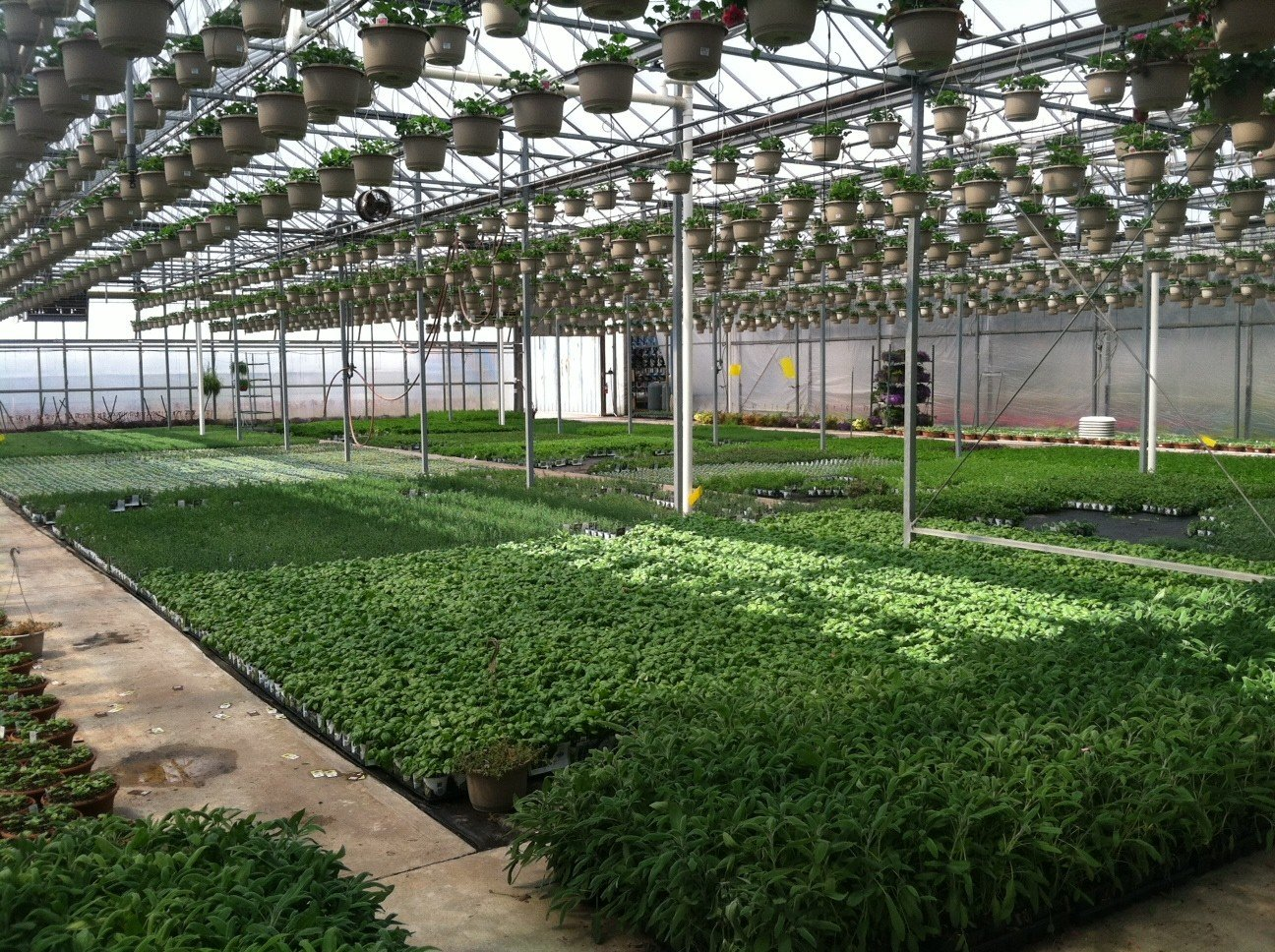 Greenhouse room gardens - From Grease To Grass Oil Speculation Cannabis Digest