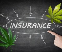 insurance-for-cannabis-business-599x419