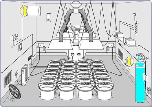 hydroponic-grow-room