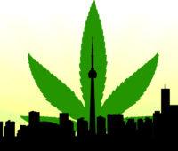 Toronto canna colour