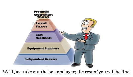 A&P Cannabis Pyramid