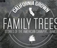 family-tree-thin