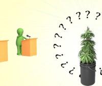 weed-plant-canna-thin